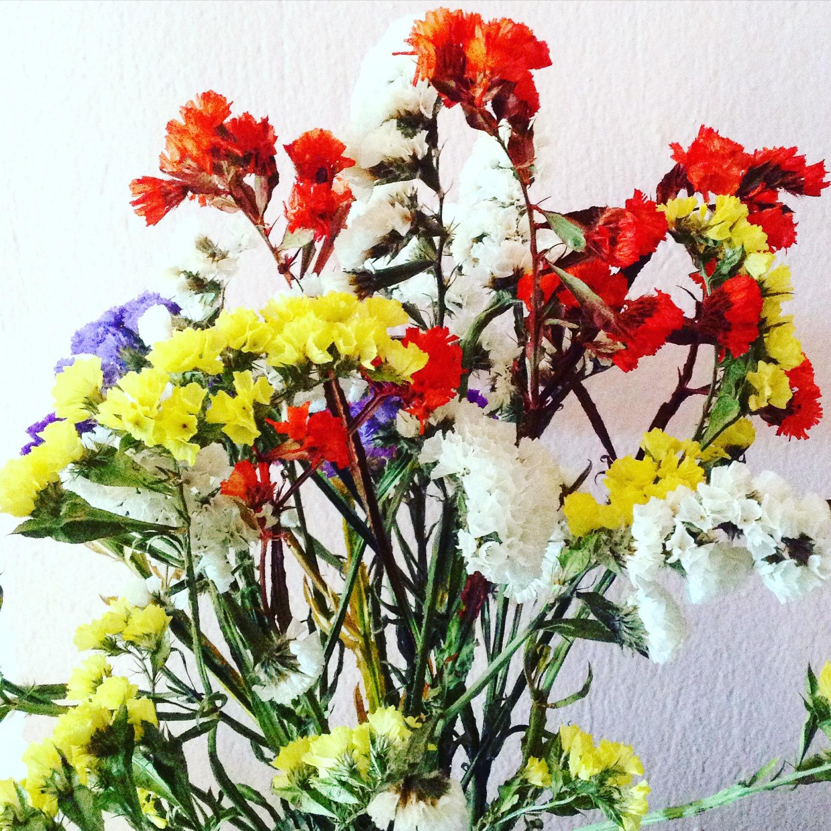 Come Seccare Le Piante l'arte dei fiori secchi – il gomitolo di birba